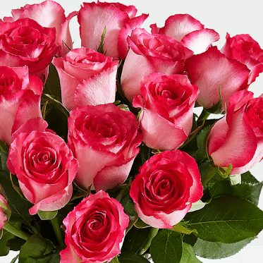 20 Pink Roses of Love-2 - send flowers to lahore pakistan