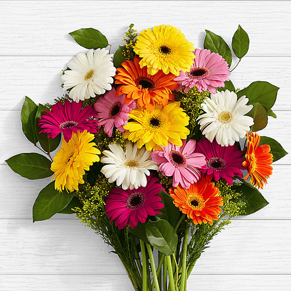 Birthday Lovely Gerbera Daisies - SendFlowers.pk