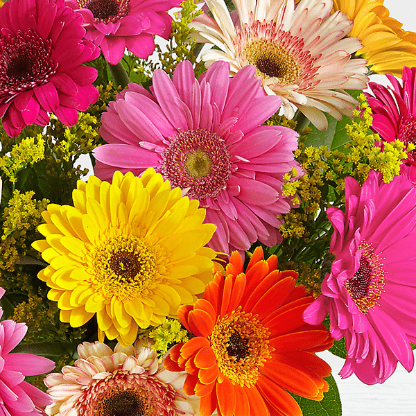 Birthday Lovely Gerbera Daisies2 Send Flowers to Lahore