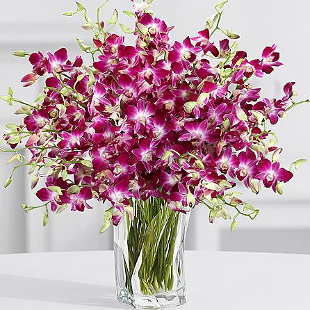 Exclusive Purple Birthday Orchids SendFlowers To Pakistan