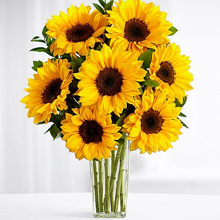 Sunflower Sparkle SendFlowers To Pakistan