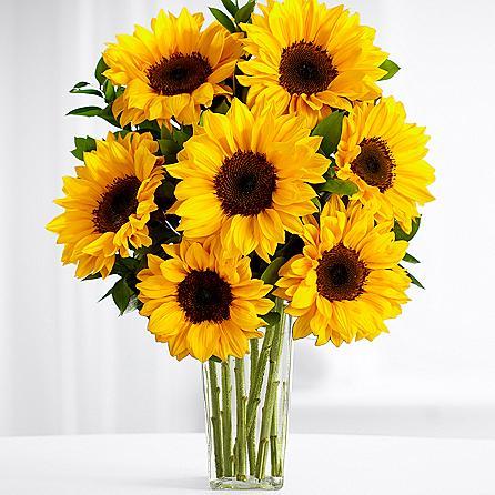 Sunflower Sparkle SendFlowers To Pakistan