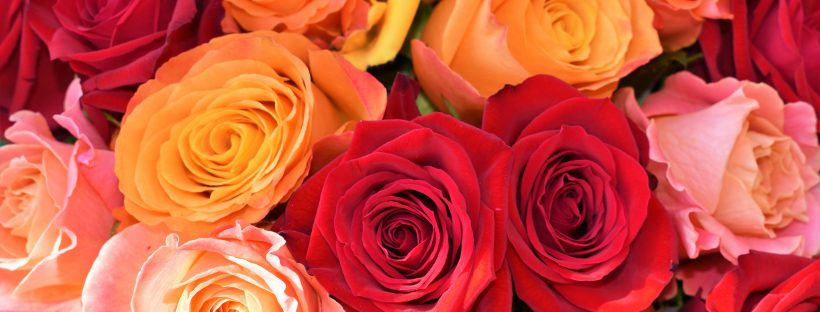 Mix Flowers Delivery - send flowers to lahore