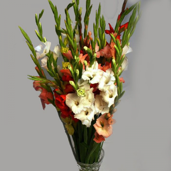 send Stunning Gladiolus gift on birthday